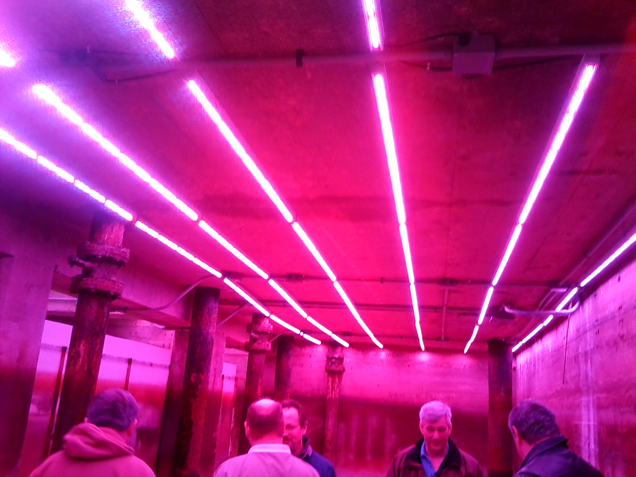 Construction of Red and blue lights in growth chamber.